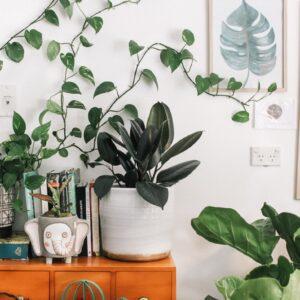 Best Indoor Garden Ideas